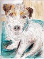 #21 - Hummer the JRT - Dog Breed Project