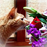 Calvin loves flowers!
