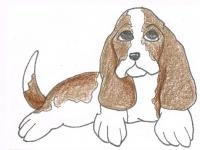 Basset Hound for ARTG33K74
